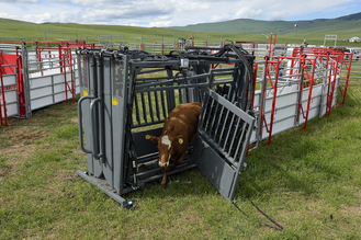 Double Squeeze Cattle Chute supplier